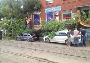 Упавшее дерево помяло две машины в центре Краснодара