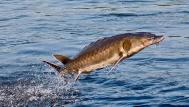 Азов: судьба царь-рыбы