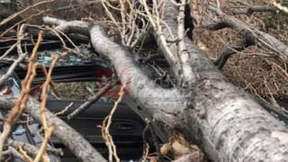 Упавшие деревья превратили в автохлам несколько машин в разных районах Сочи