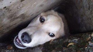 Застрявшего в бетонных плитах пса спасли в Мостовском районе