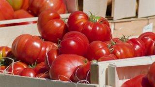 Как повысить урожайность томатов с помощью звука, выяснили ученые