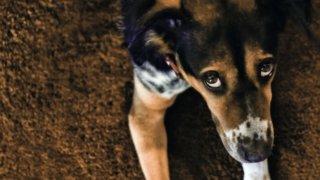 Жители Сочи пожаловались на массовое отравление бездомных собак