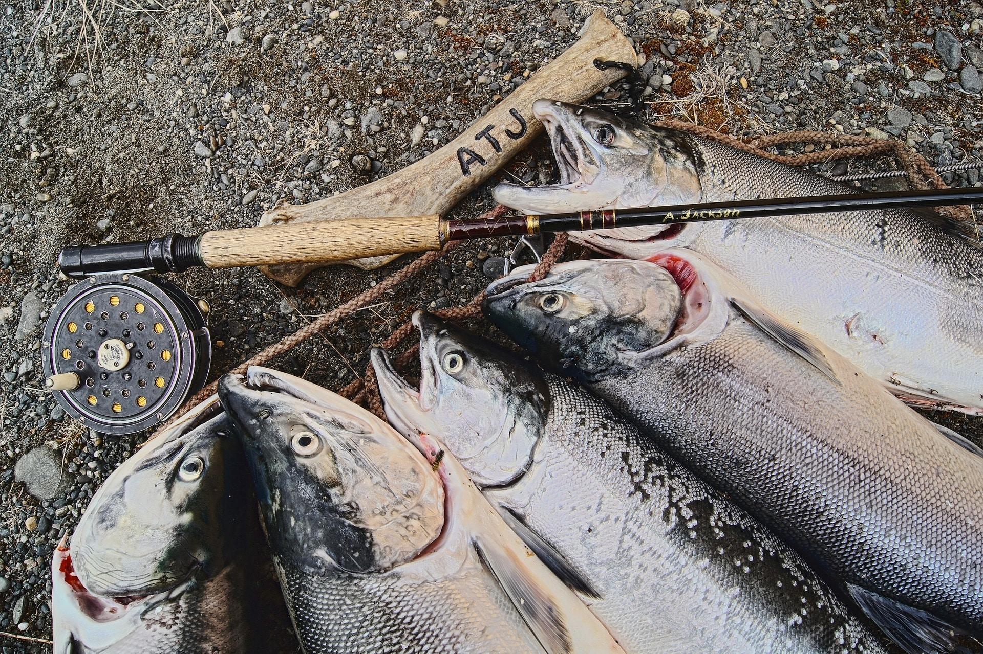 На Кубани закрывают сайты с рекламой незаконных орудий рыбной ловли