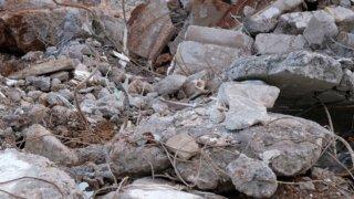В Краснодаре при взрыве в гаражном кооперативе погибла женщина, еще двое ранены