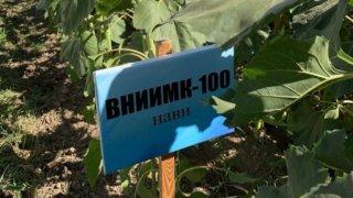 Компания «Русское поле» и ВНИИ масличных культур имени Пустовойта представили семена на выставке в Узбекистане